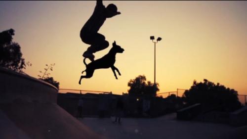 Dogboarding-skateboarding